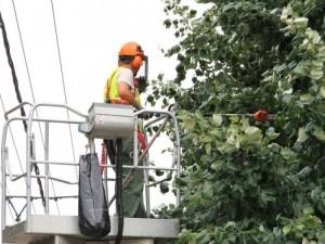 Felhívás villamos hálózatok környezetének tisztántartására